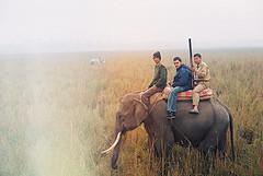 assam elephant