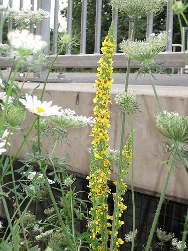 homerton station flowers