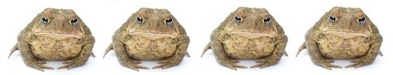 toads revisited